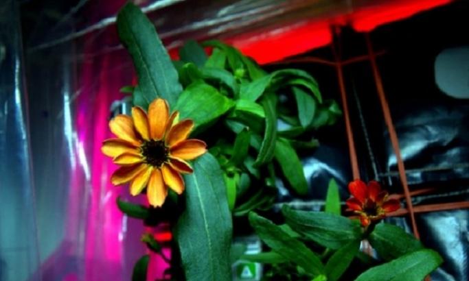 ФОТО: Ова е првиот цвет во вселената