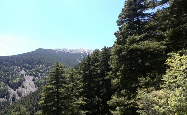 Новогодишен планинарски марш до врвот Пелистер