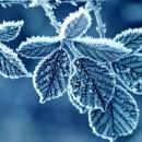 zima.jpg700