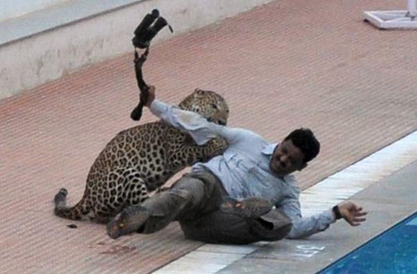 Леопард нападна индиско училиште - шестмина повредени