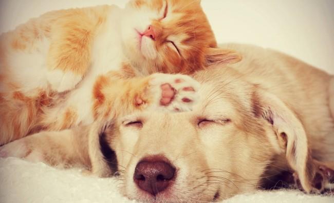 Откриено - Кој не' сака повеќе, кучињата или мачките?