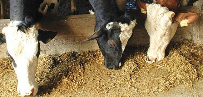 Наскоро оглас за доделување државно земјоделско земјиште за производство на сточна храна