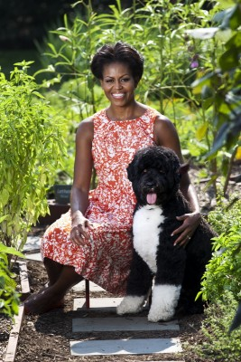 First Lady Michelle Obama is seen with Bo, the Obama family dog, in the White House Kitchen Garden, Sept. 14, 2011. (Official White House Photo by Lawrence Jackson) This official White House photograph is being made available only for publication by news organizations and/or for personal use printing by the subject(s) of the photograph. The photograph may not be manipulated in any way and may not be used in commercial or political materials, advertisements, emails, products, promotions that in any way suggests approval or endorsement of the President, the First Family, or the White House.