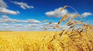 Зголемени земјоделските површини