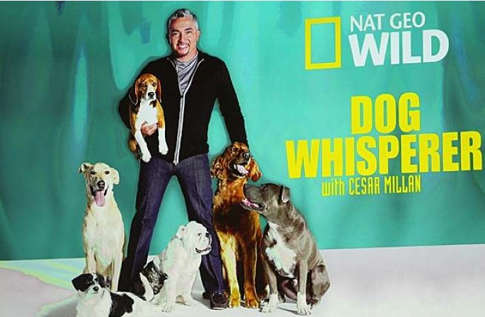 """""""Шепкачот на кучиња"""" под истрага поради злоупотреба на животни"""