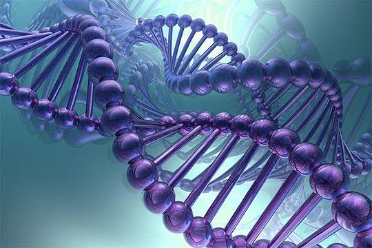 ДНК е клуч во борбата против килограмите
