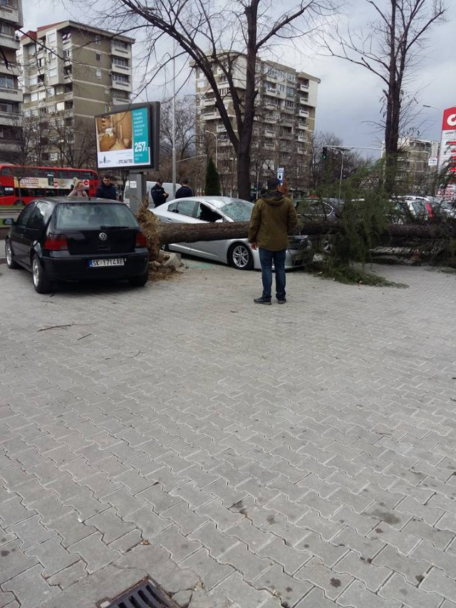 ФОТО: Дрво смачка автомобил во Скопје
