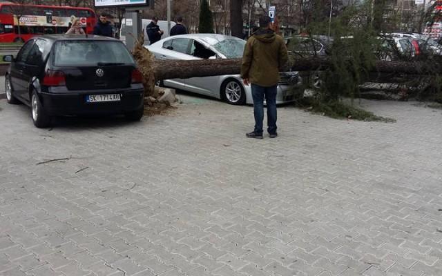 """ФОТО: """"Ѕид на сообраќајниот срам"""""""