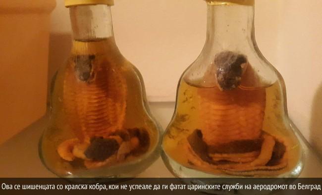 kralska-kobra-sisenca-m-storija-01