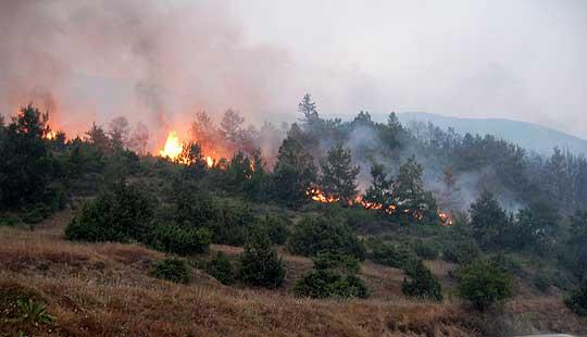 Шумскиот пожар во Вирче предизвикан од човечки фактор