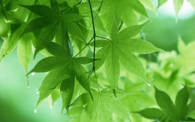 Листови од дрво по пролетен дожд