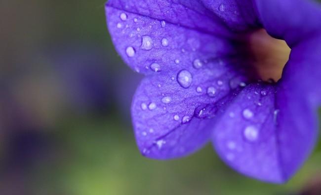 Цвет по пролетен дожд