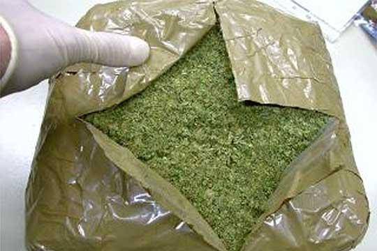 Кривична за стружанец кој одгледувал марихуана