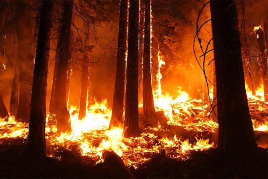 Беснеат шумски пожари во Русија