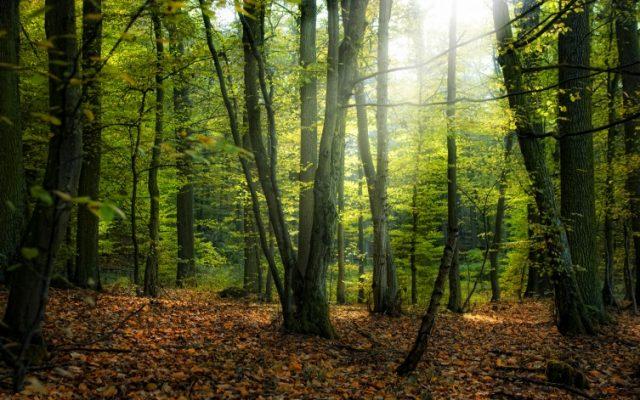 Зголемено производството на шумски производи во државните шуми