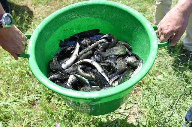 Вардар порибен со 1.500 пастрмки