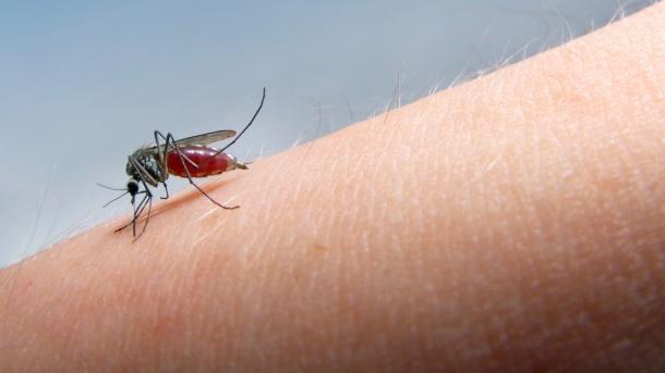Тетовец се вратил со маларија од Мали, сега е на Инфективна во карантин