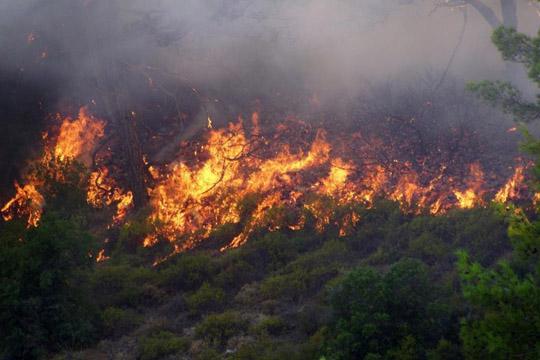 Во голем дел локализиран пожарот во Богданци