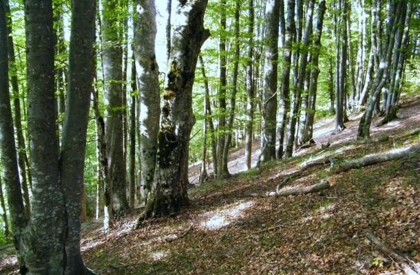Од денеска ограничување за движење во шуми