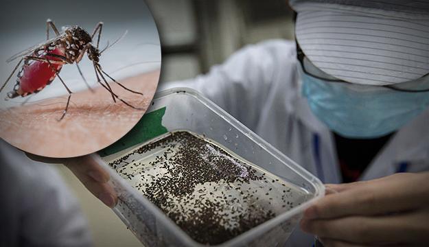 zika-komarci