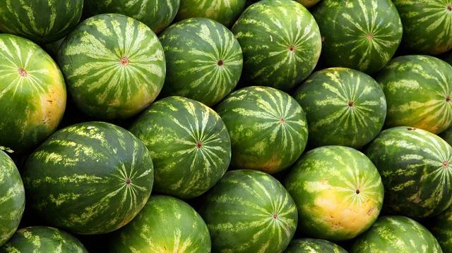 bostan-lubenica
