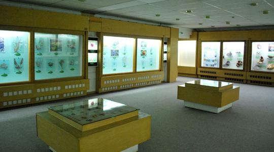 музеј