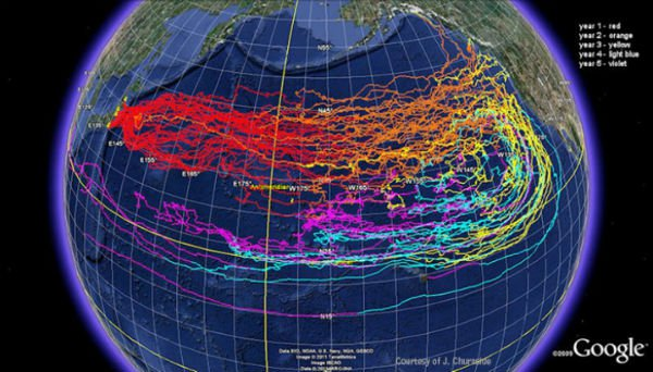 officials-fukushima-has-now-contaminated-13-of-the-worlds-oceans