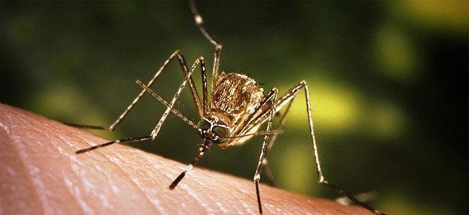 Во Србија регистрирани 17 случаи на заболени од вирусот на западнонилска треска