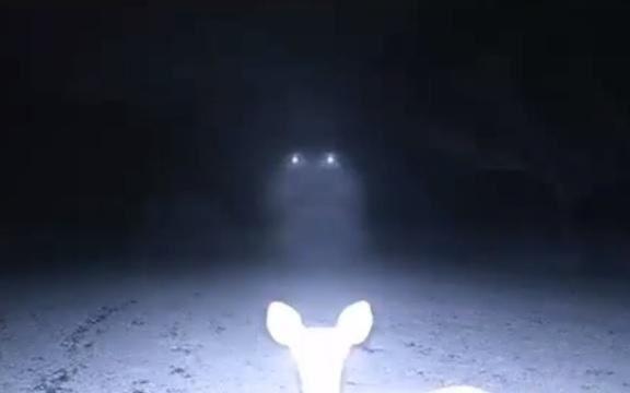 deer-ufo