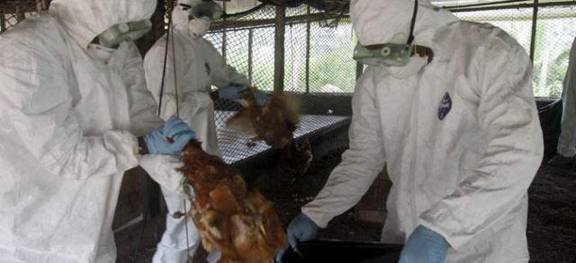 Во Франција регистрирани 52 жаришта на птичји грип