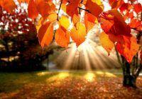 soncevo-640x360