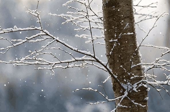 studeno-sneg-vreme