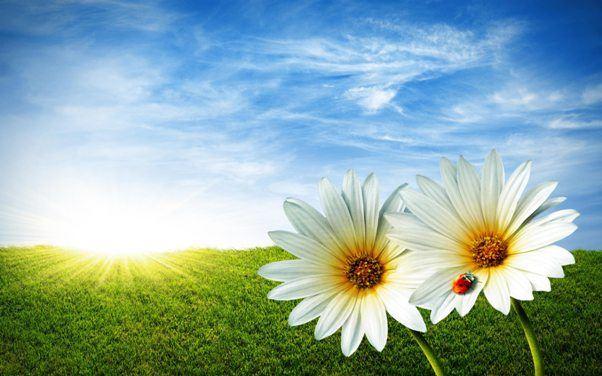 prolet-cvetovi