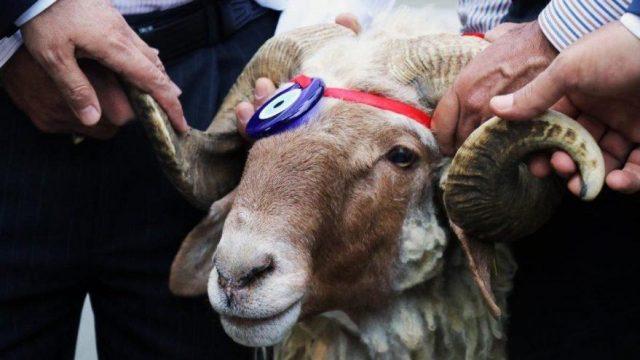 Турците на жртвени животни за Курбан-бајрам ќе потрошат 1,6 милијарди евра