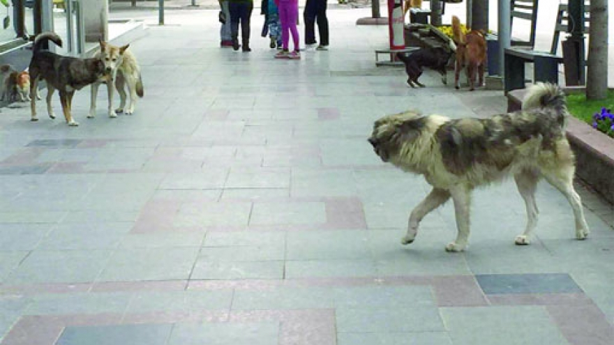 Три лица нападнати од кучиња скитници во Скопје
