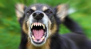 Уште еден напад на куче скитник