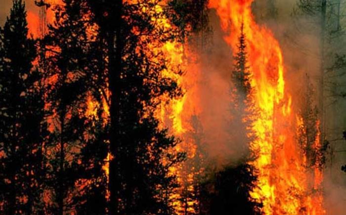 Голем пожар на Беласица, гореше бука и бел бор