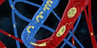 Пливачки и флексибилни микророботи создадени според инспирација од бактериите